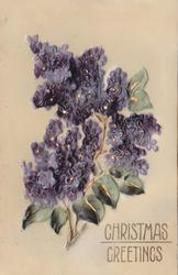 CHRISTMAS GREETINGS  single branch of lilacs, many flower heads