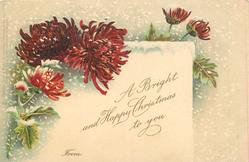 A BRIGHT AND HAPPY CHRISTMAS TO YOU  FROM  deep red chrysanthemums, snow falling