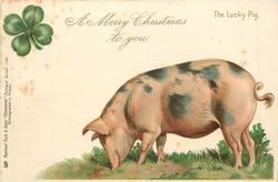 A MERRY CHRISTMAS TO YOU  pig faces left, head down, 4 leaf clover above left