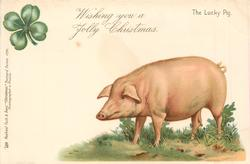 WISHING YOU A JOLLY CHRISTMAS  pig faces left, 4 leaf clover above left