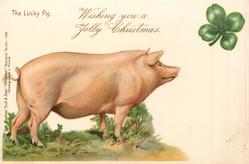 WISHING YOU A JOLLY CHRISTMAS  pig faces right, 4 leaf clover above right