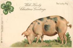 WITH HEARTY CHRISTMAS GREETINGS  pig faces left, head down, 4 leaf clover above left