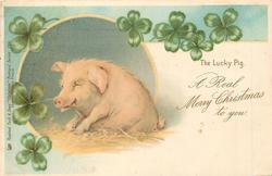 A REAL MERRY CHRISTMAS TO YOU  pig sits facing left with 4 leaf clover