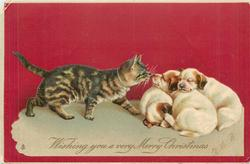 WISHING YOU A VERY MERRY CHRISTMAS  cat approaches huddle of three puppies