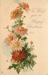 TO WISH YOU A HAPPY CHRISTMAS FROM  chrysanthemums