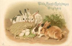 WITH BEST CHRISTMAS WISHES two rabbits look in sack filled with eggs, two more rabbits behind