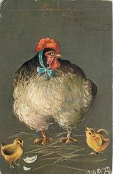 fantastic hen wearing a blue ribbon, two chicks below