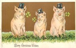 MERRY CHRISTMAS WISHES  three pigs sit facing front, wearing top hats, with 4 leaf clover in mouths