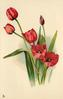 five red tulips and a bud, tallest tulip facing left