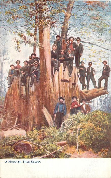 A MONSTER TREE STUMP or MONSTER TREE STUMP