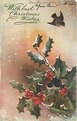 one robin in flight, holly right