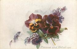 PANSIES AND HELIOTROPE