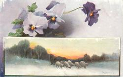 WITH BEST CHRISTMAS WISHES or A HAPPY CHRISTMAS TO YOU  pansies above insert of 6 sheep