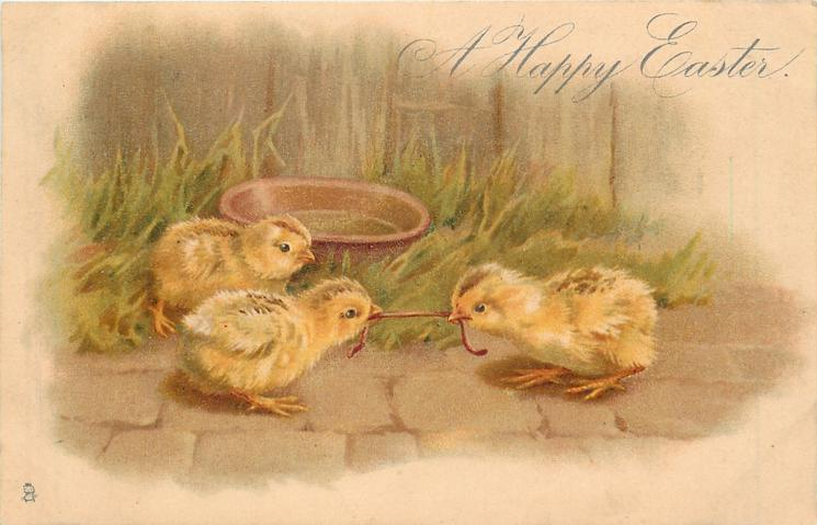 A HAPPY EASTER 3 chicks, two tugging at worm
