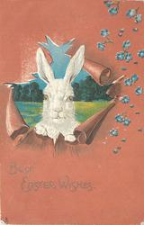 BEST EASTER WISHES white rabbit peers through punched out hole, forget-me-nots