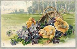 EASTER GREETINGS  three chicks & purple violets in front of basket