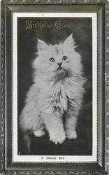 A SAUCY KIT  white kitten