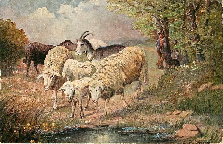 five sheep, one goat, one human