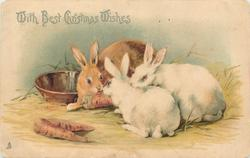 WITH BEST CHRISTMAS WISHES one tan rabbit and two white rabbits with carrots, shallow dish behind