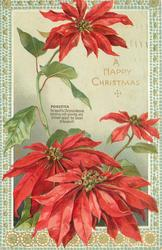 A HAPPY CHRISTMAS  greeting right centre. three flowers below greeting and one above it