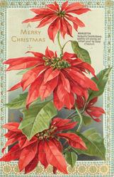 A MERRY CHRISTMAS three large flowers, bottom flower partly covered by leaf, another hidden at back