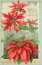 A HAPPY CHRISTMAS greeting upper right, three flowers below greeting and one above it, two leaves in bottom border
