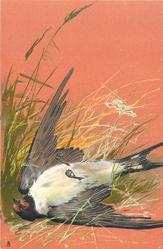 single bird, dead, on ground