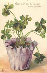 4 leaved clover, in purple pot & verse