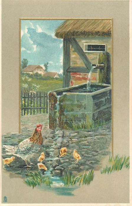 farmyard scene, hen and chicks in front of water trough