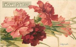CARNATIONS  pink & red, three in front og stalks, on behind