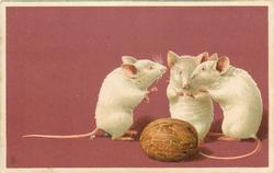 three white mice confer behind a wallnut