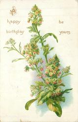 A HAPPY BIRTHDAY BE YOURS herbaceous plant with tiny red flowers