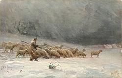 shepherd front as sheep move right over snow