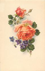one fully, another partially blown orange roses, and one bud, purple violets