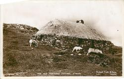 OLD THATCHED COTTAGE  sheep