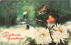 two robins sit on snow branches above white chrysanthemum, distance windmill