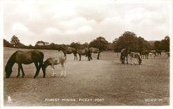 FOREST PONIES, PICKET POST