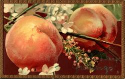 two large peaches & blossom