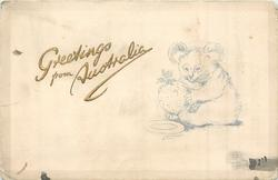GREETINGS FROM AUSTRALIA  seated koala examining Christmas pudding held in front paws