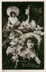 WISTERIA, 3 insets, MISS MARIE STUDHOLME, MISS GAYNOR ROWLANDS, MISS MURIEL KENNEDY