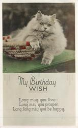 MY BIRTHDAY WISH white Persian cat in basket on table