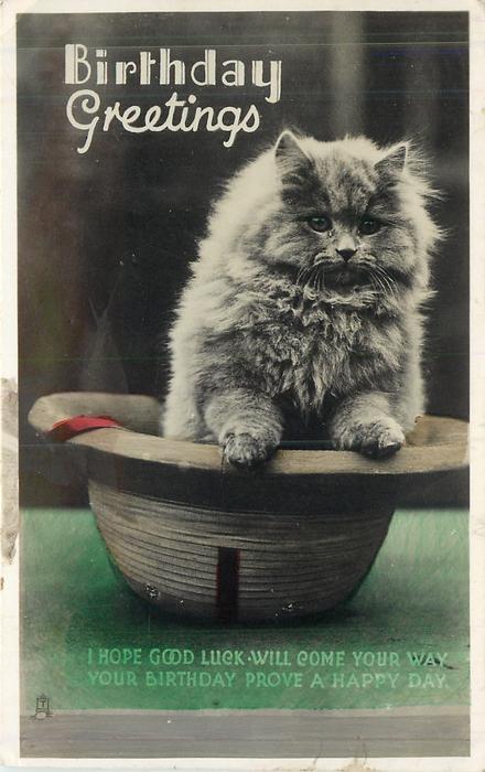 BIRTHDAY GREETINGS cat standing in hat