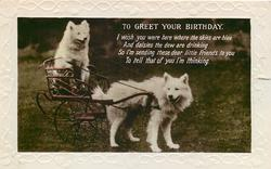 TO GREET YOUR BIRTHDAY  two white dogs, one pulling the other on a cart