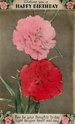 WISHING YOU A HAPPY BIRTHDAY carnations