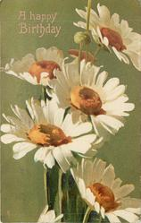 A HAPPY BIRTHDAY five white daisies, gilt/green background