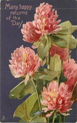 MANY HAPPY RETURNS OF THE DAY red clover, purple background