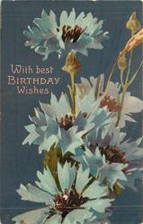 WITH BEST BIRTHDAY WISHES  blue corn flowers, blue background