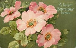 A HAPPY BIRTHDAY TO YOU four pink dog-roses, green or gilt background