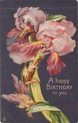 A HAPPY BIRTHDAY TO YOU  purple & yellow iris, two buds  lower left