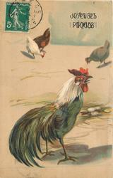 rooster stands facing right, three distant chickens